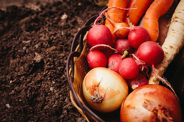 有機野菜とは?無農薬野菜との違いを農家が分かりやすく解説