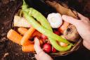 有機野菜の危険性