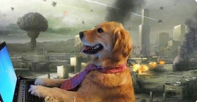Meme of golden retriever in tie applying for jobs during a pandemic