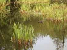 Kingfisher (5)