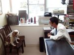 大阪の動物病院で夜間・救急対応可能一覧!知っていれば安心!