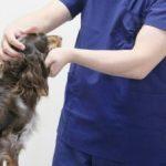 夜間・深夜対応の動物病院(大阪)!24時まで、朝方まで診察している病院