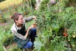 家庭菜園で初心者が育てやすい野菜は?短期間で育つ野菜がおすすめ