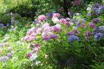 紫陽花の名所!関西で有名なスポットは?