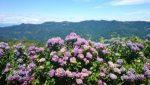 紫陽花の名所!九州で有名なスポットは?
