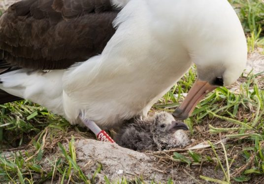 Pájaro y su polluelo (Servicio de Pesca y Vida Silvestre de Estados Unidos)