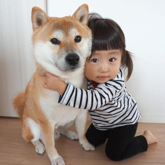 dog17