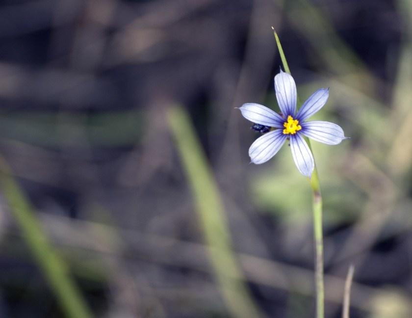 flower-2372998_1280