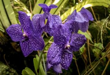 _MG_2222-Sarasota Garden