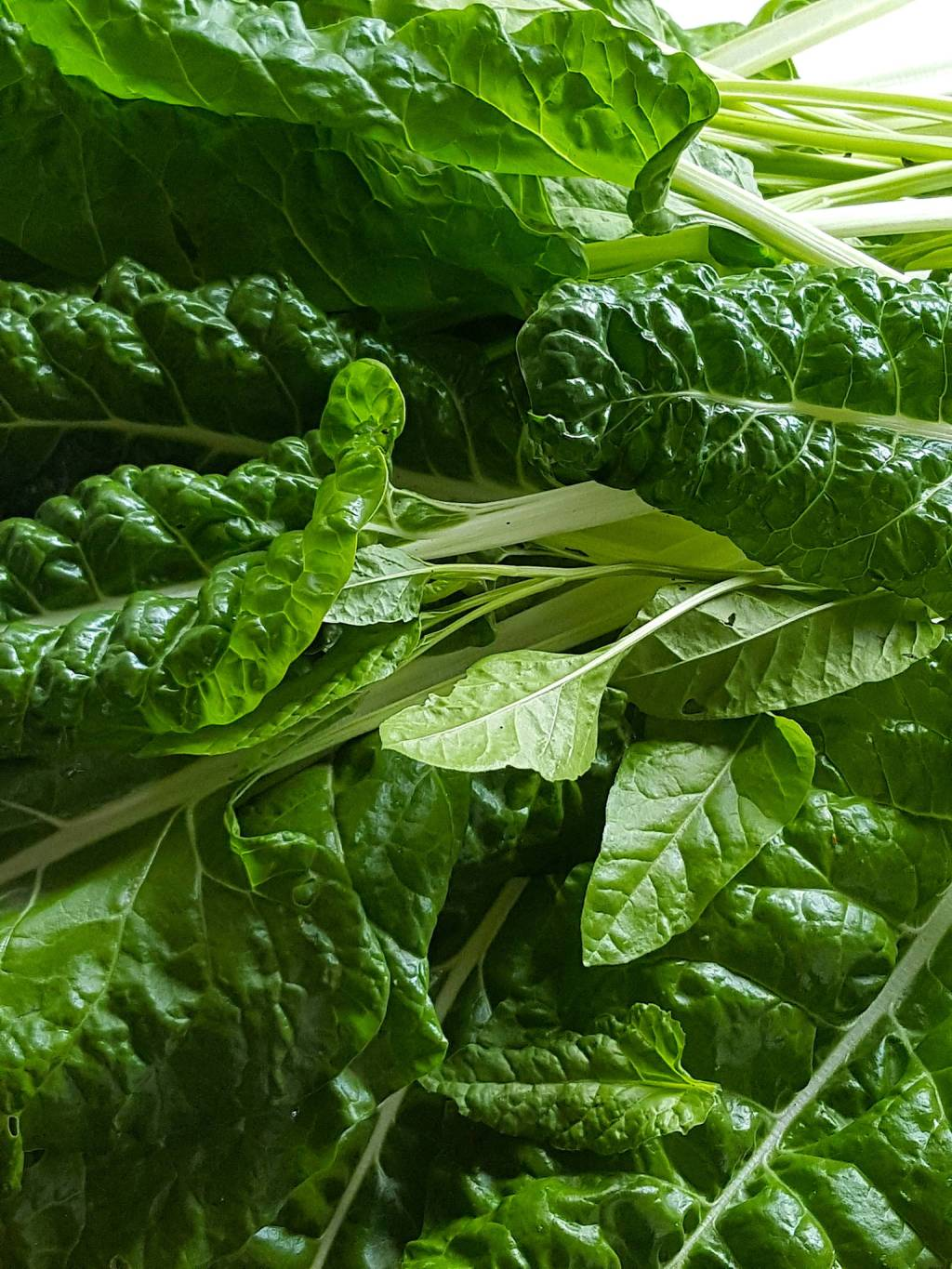 Silverbeet – different types