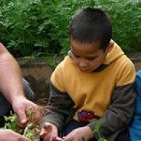"""""""Cidades sem Fome"""" fomenta horta urbana comunitária e escolar"""