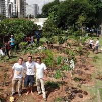 Paulistanos se unem para criar miniflorestas públicas na cidade