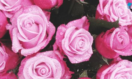 장미꽃 오래 보관하는 방법