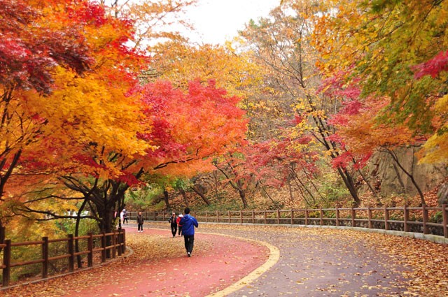 beatiful-fall-foliage-spot-in-seoul 05