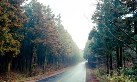 [제주 허 씨를 위한 안내서] 3편 : 걷자, 제주 사려니숲길