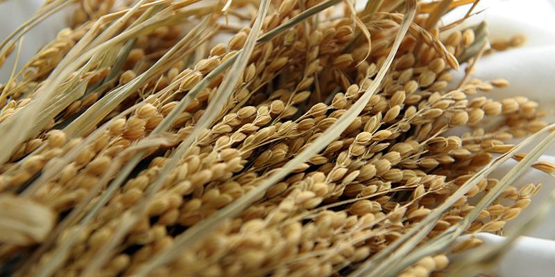 쌀뜨물 제대로 사용하는 6가지 방법