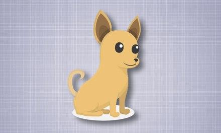 강아지에게 나쁜 음식 & 좋은 음식