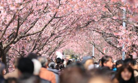 봄 철 알레르기에 대비한 건강 수칙