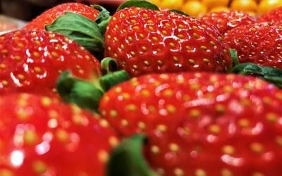 [과일 칼럼] '눈의 향'이라 불리는 딸기, 설향