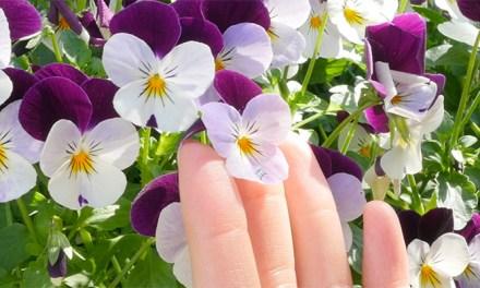 꽃 이름 쉽게 알아내는 방법