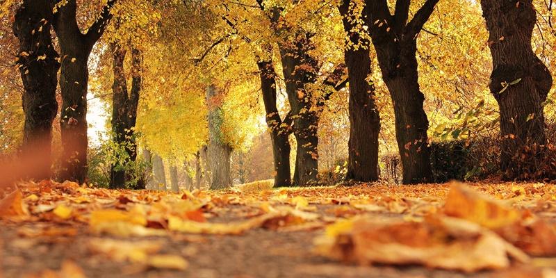가을철, 건강한 환절기를 보내기 위해 알아야 할 생활습관 4가지