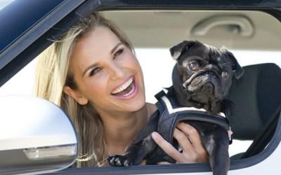 강아지를 안고 운전하면 도로교통법 위반일까요?