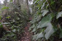 Trail up Mt Agung