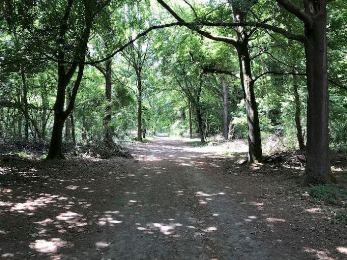 Inside Whippendell Wood