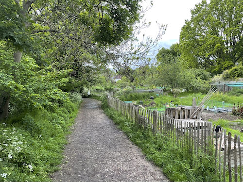 The start of green space on the Celandine Route