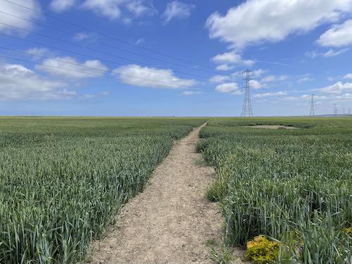 Reclaimed land on Faversham to Whitstable walk