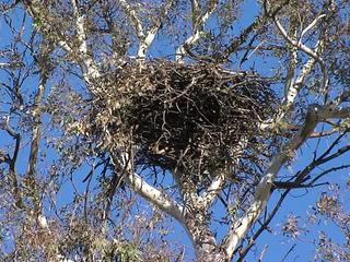 Julian B 39 S Photo At Eagle Nest Treehouse Farmstay