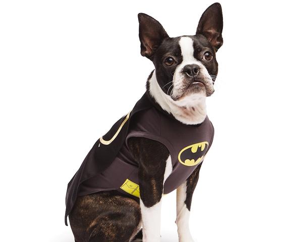 Superheroes dominate top pet costumes