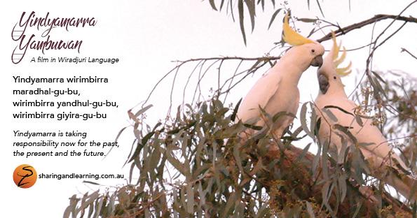 yindyamarra postcards A2