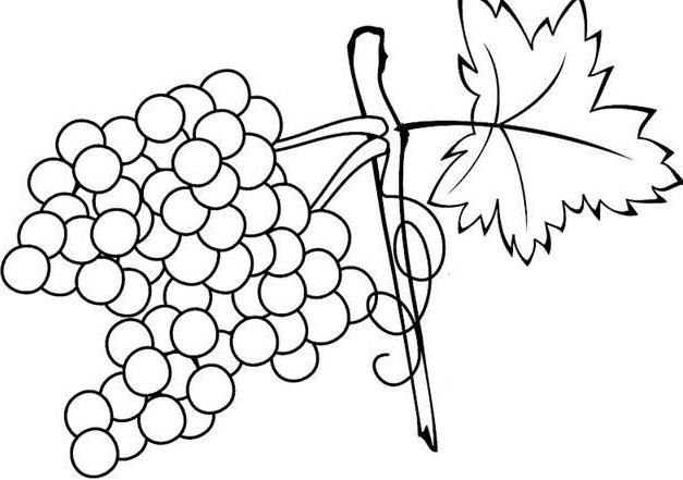Sketsa Gambar Buah Anggur