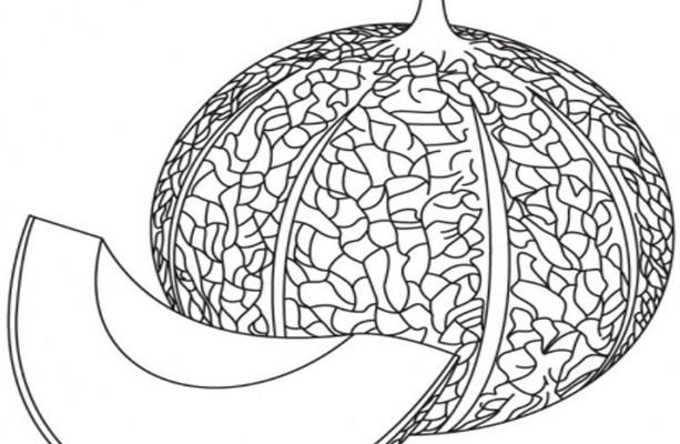 Sketsa Gambar Buah Melon