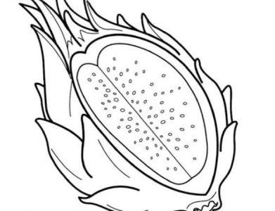 Sketsa Gambar Buah Naga