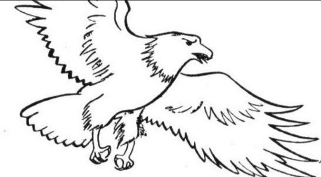 1001 Keistimewaan Sketsa Gambar Burung Terlengkap Dan Penjelasany