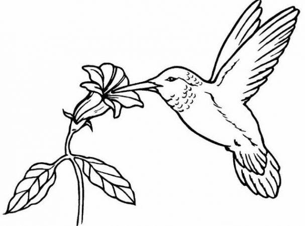 Sketsa Gambar Hewan Burung