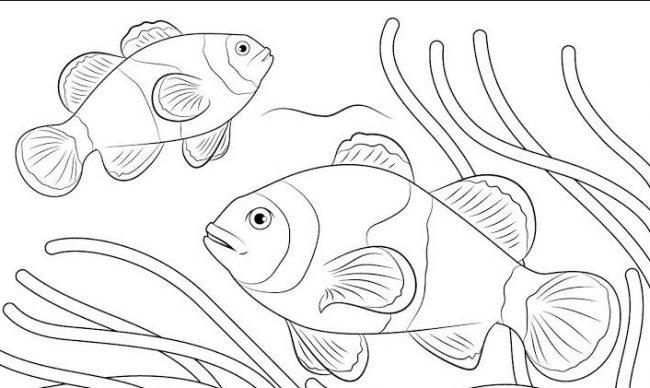 1001 Keindahan Sketsa Gambar Ikan Terlengkap Beserta Penjelasanya