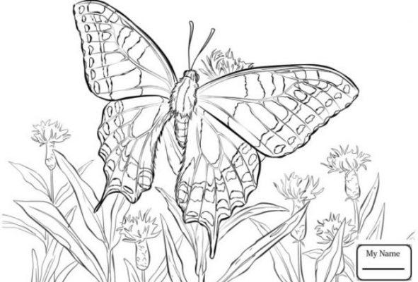 Sketsa Kupu-kupu dan Bunga