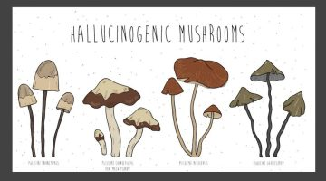 Image result for psilocybin