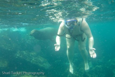Shari with seals in the Galapagos Islands