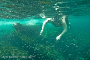 Shari snorkelling with the seals in the Galapagos Islands