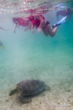 Snorkelling with sea turtles, Mayan Riviera, Mexico