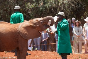 David Sheldrick Wildlife Trust