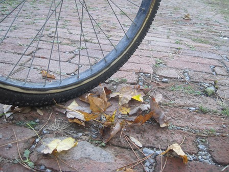 bike in leaves