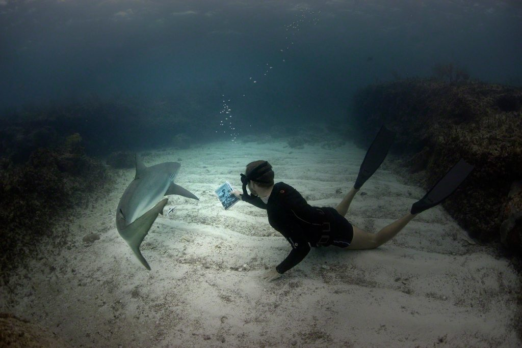 Chris shows off book to Caribbean Reef Shark Photo by Charlotte Sams ©Bimini Biological Field Station Foundation Copyright 2016