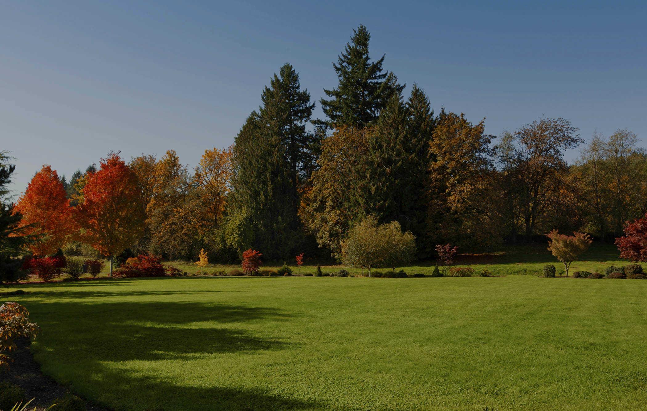 fall-lawn-care-4