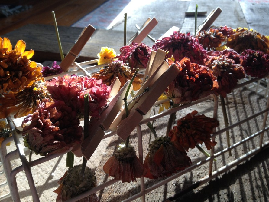 Let dry until no moisture is left and flowers are dried completely- few days