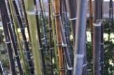 aJTownsj_bamboo